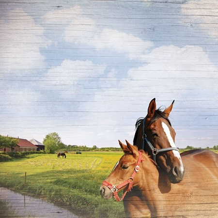 Hold Your Horses 12x12 Scrapbooking Paper