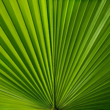 Palm Leaf 12x12 Scrapbooking Paper