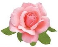 Pink Rose Scrapbooking Die Cut