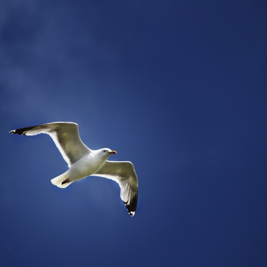 Seagull 12x12 Scrapbooking Paper
