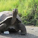 Tortoise 12x12 Scrapbooking Paper
