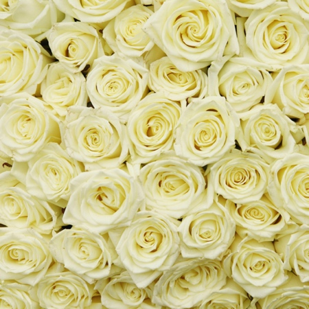 BULK BUY Cream Roses 12x12 Scrapbooking Paper - 25 Sheets
