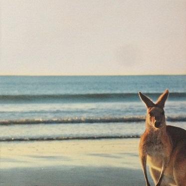 Kangaroo 12x12 Scrapbooking Paper