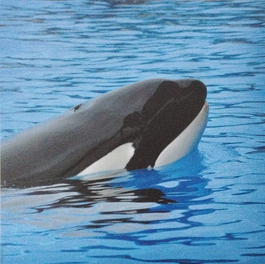 Killer Whale 12x12 Scrapbooking Paper