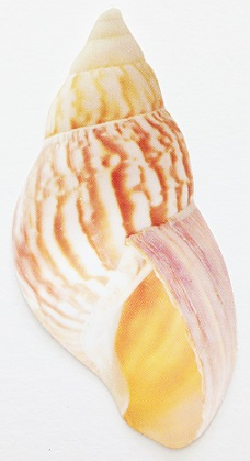 Curved Shell Die Cut Scrapbooking Sticker