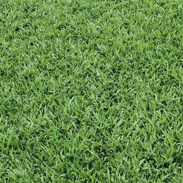 BULK BUY Grass 12x12 Scrapbooking Paper - 25 Sheets
