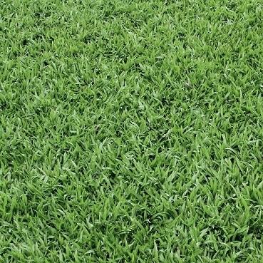 Grass 12x12 Scrapbooking Paper