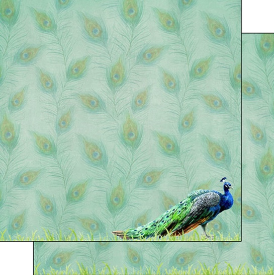 Peacock Safari 12x12 Double Sided Scrapbooking Paper