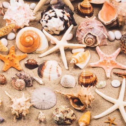 Seashells 12x12 Scrapbooking Paper