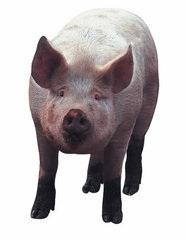Pig Scrapbooking Die Cut