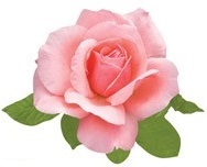 Pink Rose Scrapbooking Die Cut
