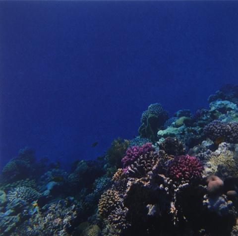 Reef 12x12 Scrapbooking Paper