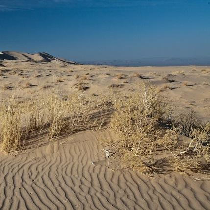 Sand Dunes 12x12 Scrapbooking Paper