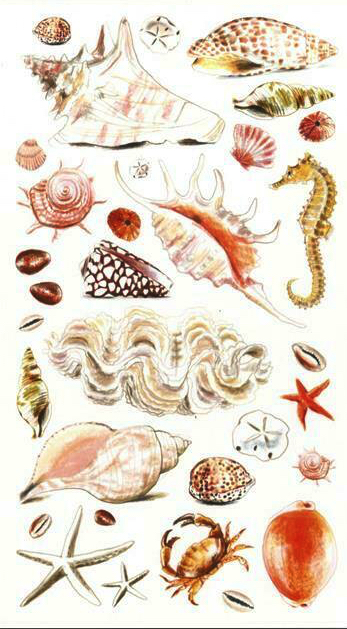 Sea Shells and Sand Scrapbooking Stickers