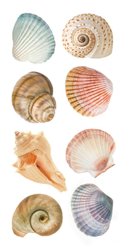 Sea Shells Scrapbooking Mini Stickers
