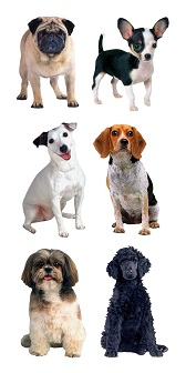 Dogs Scrapbooking Mini Stickers