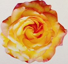 Yellow Rose Scrapbooking Die Cut