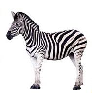 Zebra Die Cut Scrapbooking Sticker